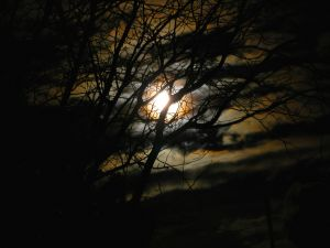 trees and moonlight in haunted setting